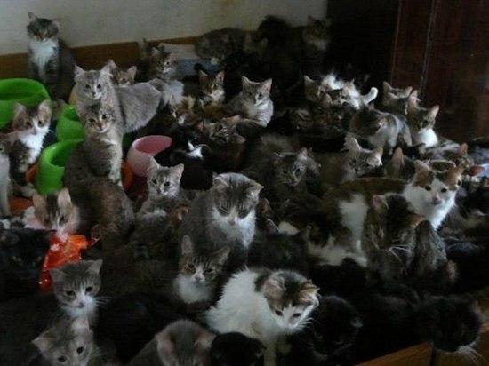 Житель Оренбурга устроил в съемной квартире отель для кошек