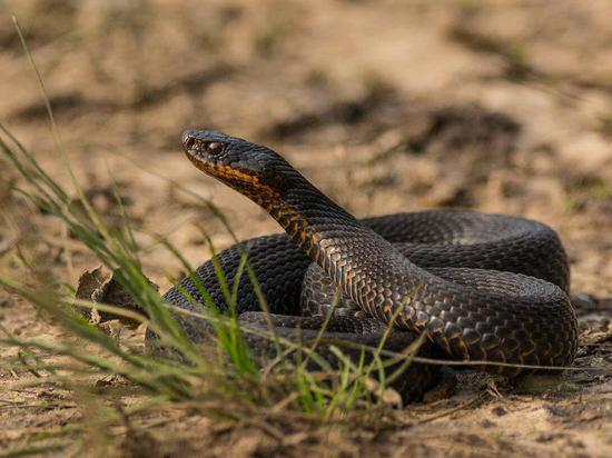 Змей стало больше после паводка в Чунском районе