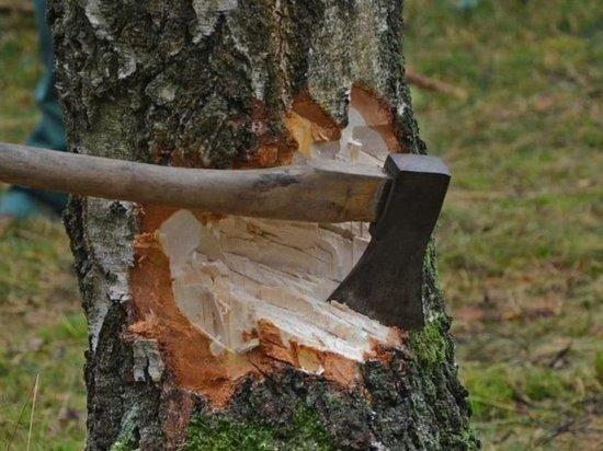 В Кваркенском районе незаконно рубили лес