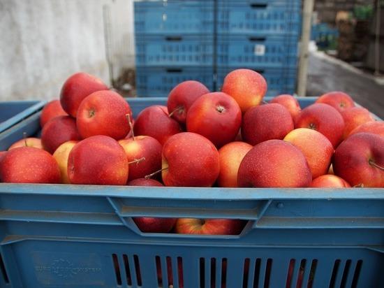 Утверждены новые правила ввоза сельхозпродукции: 5 кг фруктов, три букета