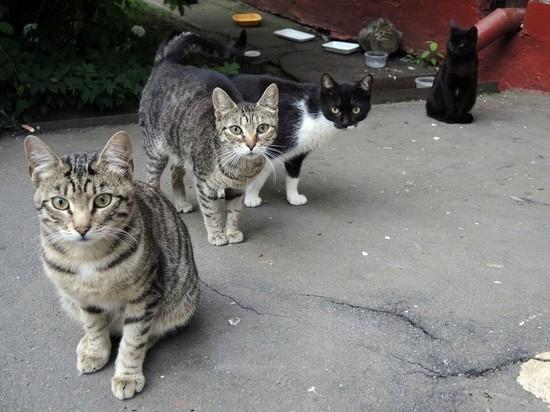 Полиция проверяет массовое отравление кошек в Москве