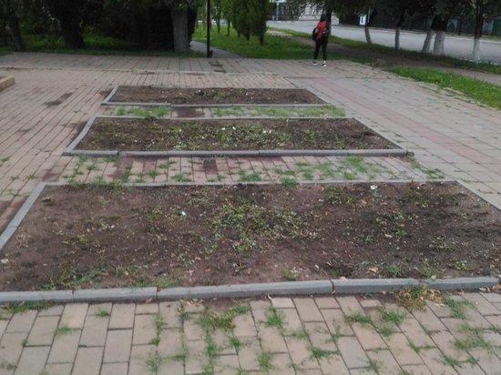 Цветники Оренбурга заражены неизвестной болезнью