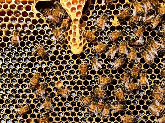 В Бурятии выяснили причину массовой гибели пчел