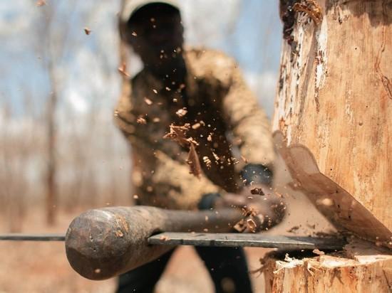 В Калининграде местный житель незаконно вырубил 44 дерева