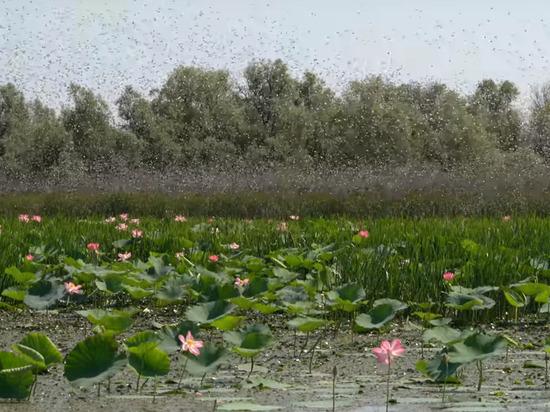 Опубликовано видео нашествия саранчи в Астраханской области