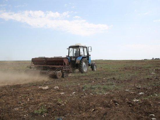 В Волгоградской области на месте свалки высаживают фитосанитарные травы