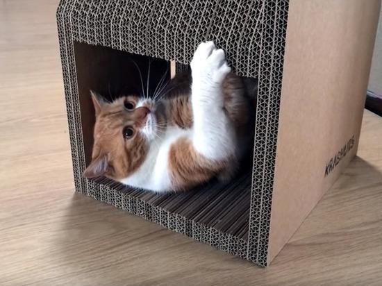 Власти Нью-Йорка запретили удалять кошкам когти