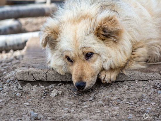 Под Белогорском неизвестные отравили бездомных собак