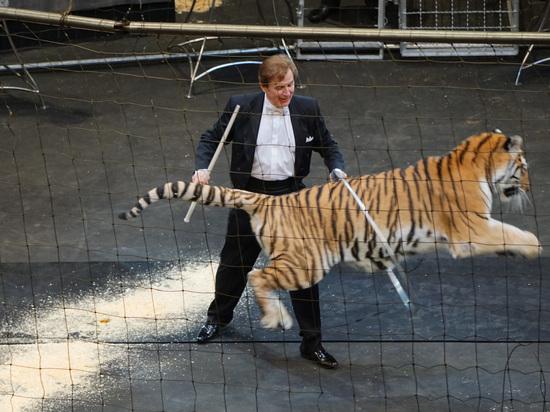 В Воронеж приехали гигантские тигры