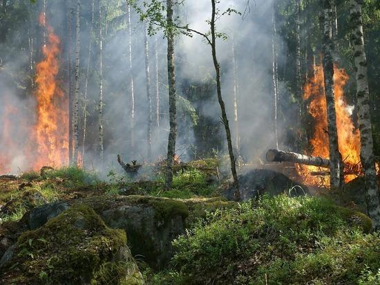 Россияне составили петицию о введении ЧС в Сибири из-за пожаров