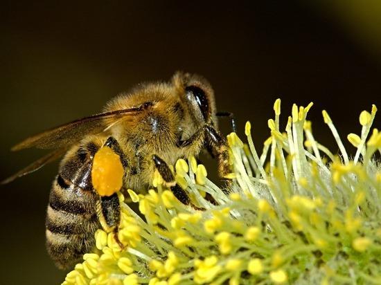 Причиной масштабной гибели пчел в России могли стать китайские пестициды