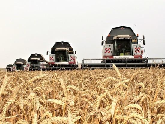 Будем с хлебом: капризы погоды не сказались на урожае зерновых
