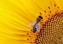 Первое в России уголовное дело по факту массовой гибели пчел возбуждено в Орловской области