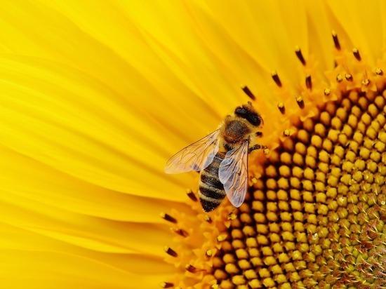 В погоне за урожаем сельхозпредприятие извело полезных насекомых