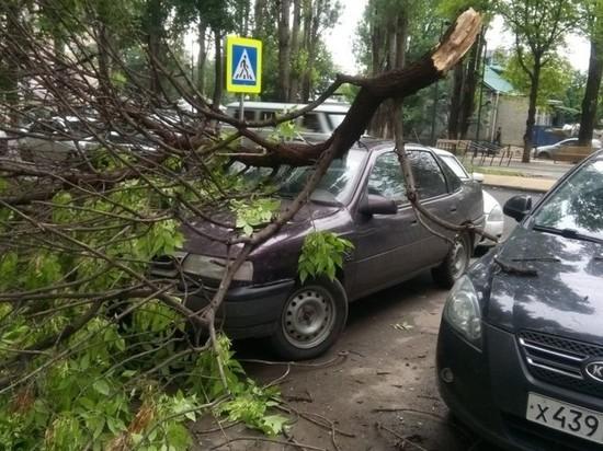 В Калининграде упавшие ветви деревьев повредили машины