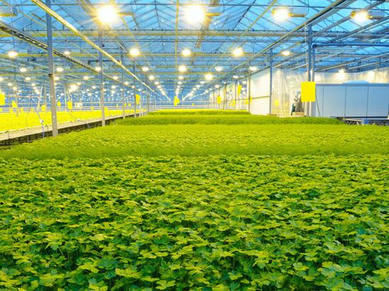 Потребности сельского хозяйства в электроэнергии обеспечены полностью