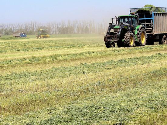 В Крыму хотят выращивать «экспериментальные бобы» из Индии