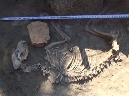 В Азове при раскопках обнаружен скелет средневековой собаки