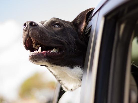 Чем больше в Улан-Удэ выделяется денег на отлов собак, тем чаще они кусают граждан