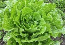 Назван главный овощ для похудения