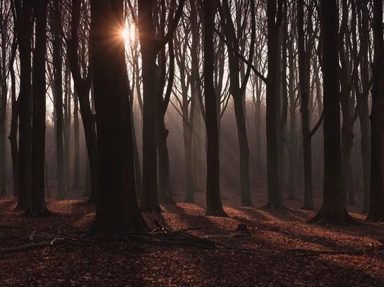 Правила поведения в лесу для заблудившихся ямальцев, назвали в МЧС