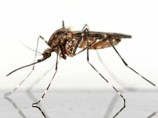 Биологи научились останавливать размножение комаров