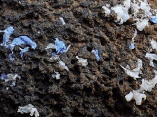 Улитки начали питаться пластиком вместо водорослей