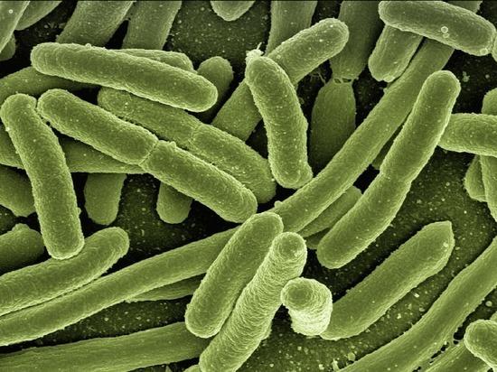 Найдены бактерии, помогающие худеть
