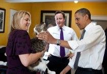 Bild: решение Джонсона завести собаку не понравится главному мышелову правительственной резиденции