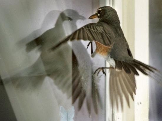 Под Калининградом стая птиц врезалась в фасад торгового центра