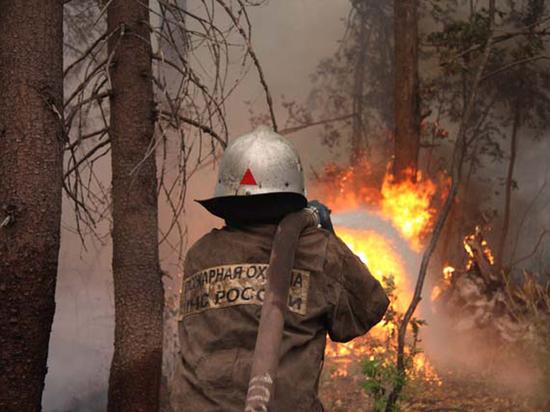 «Пожары нужны для того, чтобы не скрыть, а получить огромные доходы»