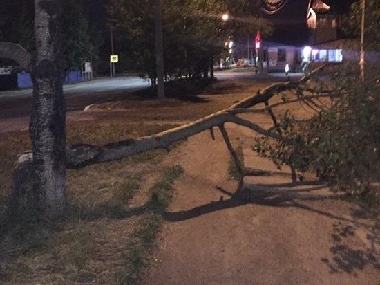 Жительница Ноябрьска чудом спаслась из-под падающего дерева