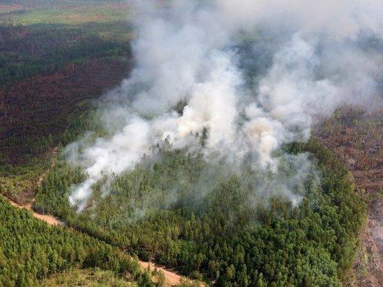 Сибирь пожирают лесные пожары: в Канаде дали совет