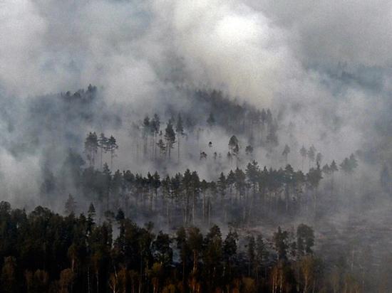 Усиление парникового эффекта и рак: ученые назвали последствия сибирских пожаров