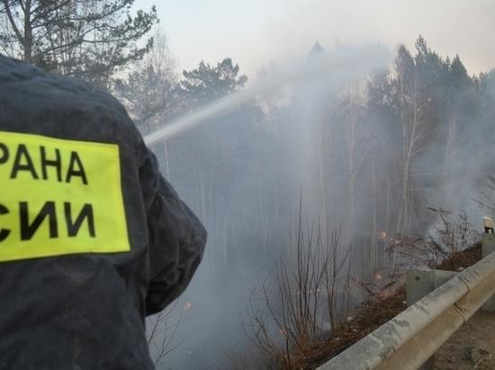 Пожары в Сибири связали с коррупцией