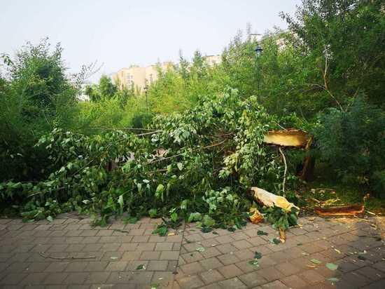 Ветер повалил дерево на площади Декабристов в Чите