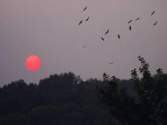 Дым и смог ушли из Новосибирска в сторону Аляски