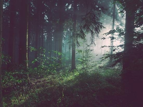 Леса Ставропольского края прирастают гектарами