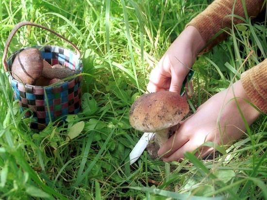 Куда во Владимирской области можно отправиться за грибами