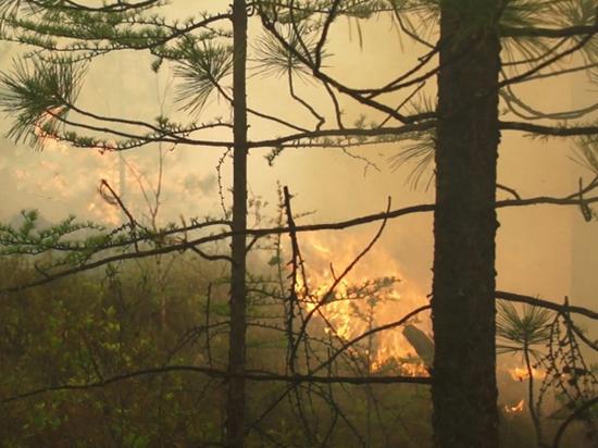 Названы катастрофические последствия пожаров в Сибири