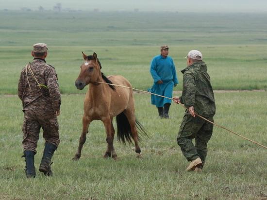 Кавалеристы российской горной бригады укротили монгольских лошадей