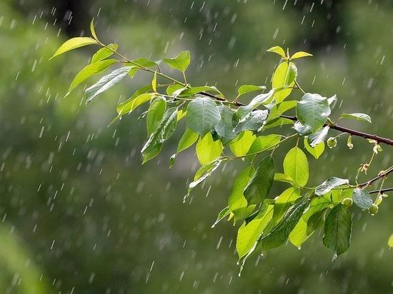 1 августа на смену жаре в Тулу придут сентябрьские дожди