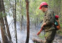 Сократили лесничих: Жириновский назвал возможные причины пожаров в Сибири