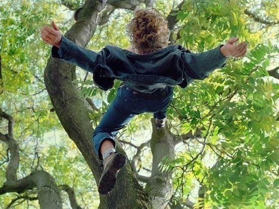 В Бугурусланском районе  ребенок упал с дерева