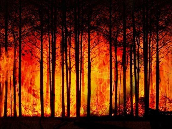 Тушить пожары в Сибири будут военные