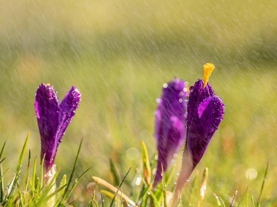 Лето все. Прохладная погода в Туле сохранится и в августе