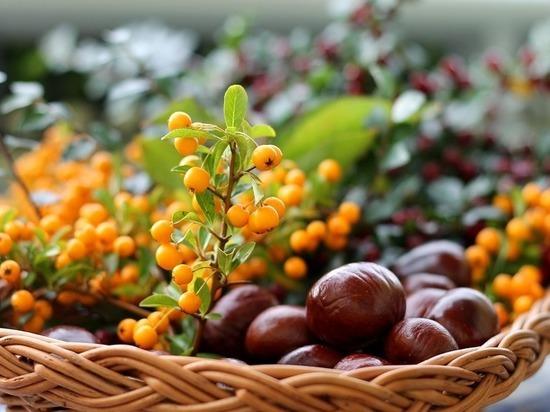 Названы фрукты и ягоды, которые следует есть в августе