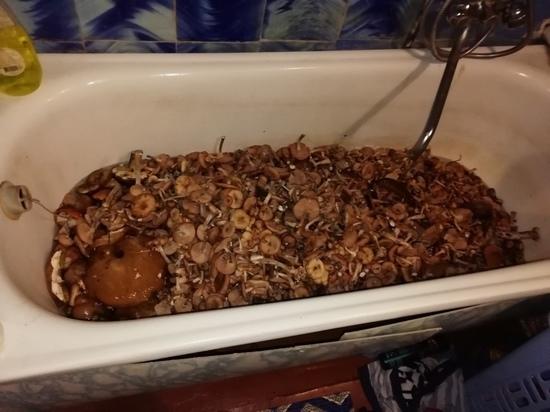 Туляк набрал ванну опят