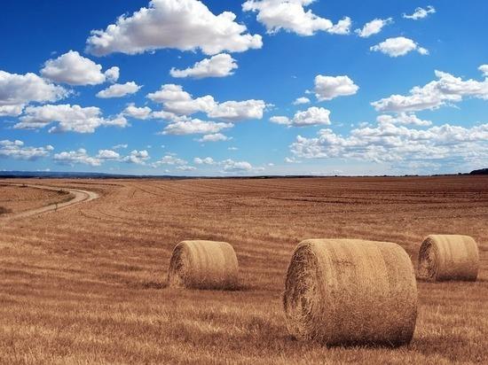 Тульский министр сельского хозяйства рассказал о ходе уборочной