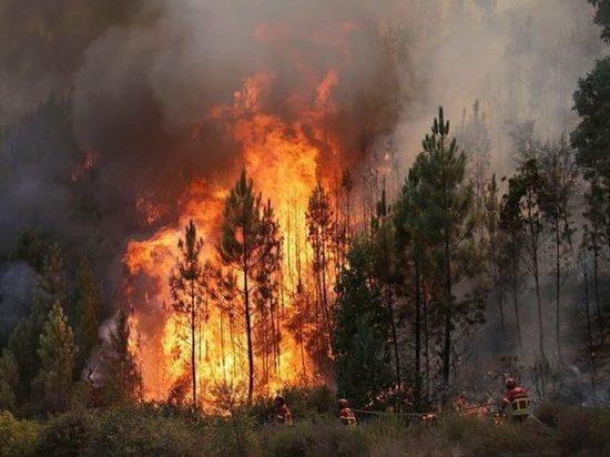 Из горящих лесов Иркутской области бегут животные